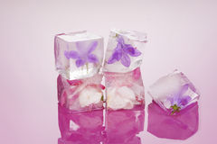 Free Ice Cold Beauty. Stock Image - 42741981