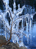 Ice cold blue. Frozen tree branches carrying deep blue icicles near frozen lake stock photography