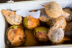Ice Cold Coconuts at Farmer`s Market in Hawaii Stock Image