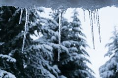 Ice and cold colors with pines royalty free stock image