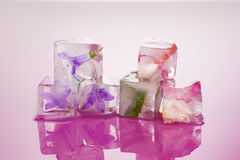 Ice cold flowers. Royalty Free Stock Image