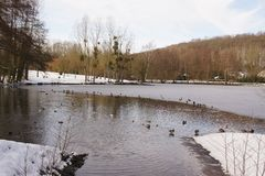 Ice-cold lake, ducks, birds, and snow - France royalty free stock image