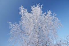 Ice-covered Baum lizenzfreie stockfotografie