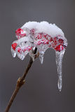 Ice covered berries Stock Images