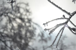 Ice covered branch on an abstract background. Ice covered branch. Cold winter.  Abstract background Stock Photo
