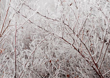 Ice-covered branches Royalty Free Stock Photo