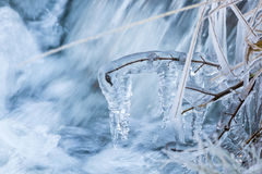 Ice covered branches Royalty Free Stock Image