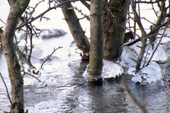 Ice-covered branches in a lake make patterns Royalty Free Stock Photos