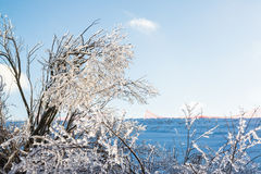 Ice Covered Branches Snow Covered Field. Beautiful glass like ice covered branches after freezing rain storm on winter day. Beautiful winter day.. Snow covered Royalty Free Stock Images