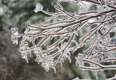 Ice covered branches Stock Image