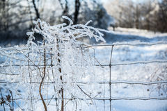 Ice Covered Branches In Wire Fence. White ice covered tree and bushes branches caught in ice covered wire fence on cold winters day. Snowy field in background Royalty Free Stock Images