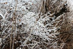 Ice covered bush. Bushed covered in ice from ice storm Royalty Free Stock Photo