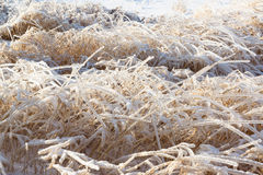 Ice Covered Bushes In Field Stock Photo