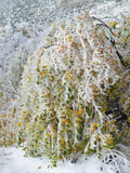 Ice Covered Colourful Autumn Leaves Stock Photography