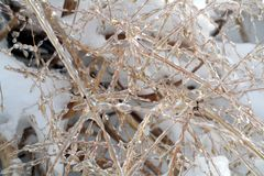 Ice Covered Grass Stock Photo