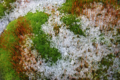 Ice covered moss Stock Images