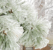 An ice covered pine tree Stock Photo