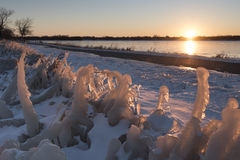 Ice Covered Plants Catch the Light of Sunset Royalty Free Stock Image