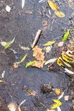 Ice covered puddle with fallen leaves in autumn royalty free stock images