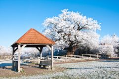 Ice covered shelter and oak tree. Stock Photo