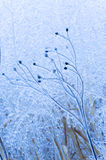 Ice covered stems of flowers Stock Photography