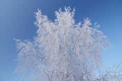Ice-covered tree Royalty Free Stock Photography