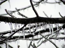 Ice Covered Tree Branch. With icecles Royalty Free Stock Photo
