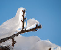 Ice covered tree branch with a snow coating Royalty Free Stock Photo
