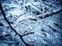 Tree branches covered with ice. Ice covered tree branches in blue light royalty free stock image