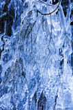 Ice-covered tree branches Stock Photography