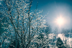 Ice Covered Tree Branches Royalty Free Stock Photography