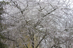 Ice covered tree Stock Photography