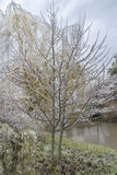 Ice covered tree Royalty Free Stock Photography