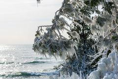 Ice covered trees along lakeshore stock photos