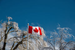 Ice Covered Trees Behind a Canadian Flag Stock Photos