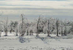 Ice covered trees in the park Stock Photos