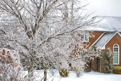 Ice covered trees after the freezing rain in Toronto, Canada Royalty Free Stock Image