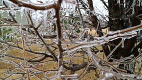 Ice covered trees and trunks Stock Images