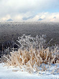 Ice covered weeds and mountain. Frozen mountian with frost covered trees in the background of ice-covered grass in the foreground Royalty Free Stock Images