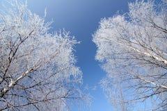 Ice-covered Zweige der Bäume und des blauen Himmels Lizenzfreies Stockbild