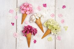 Ice cream cones with beautiful flowers. Ice cream cones with beautiful hydrangea flowers Royalty Free Stock Image
