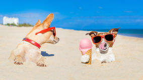 Ice cream dogs Stock Images