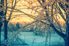 Ice Crystal Branches in the Glow of a Sunset - Retro Royalty Free Stock Image