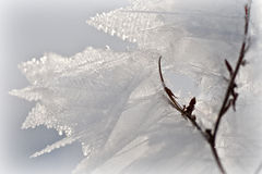 Ice crystals. In a cold and sunny winter daywinter Royalty Free Stock Photography