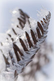 Ice crystals Stock Images