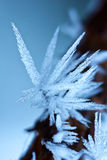 Ice crystals Royalty Free Stock Photo