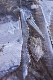 Ice crystals abstract Stock Image
