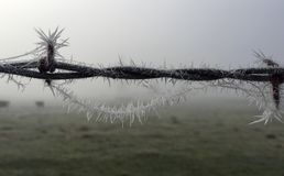 Ice-Crystals Upon a Barbed-Wired Fence Stock Images