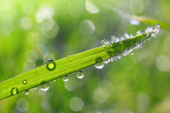 Ice crystals and dew drops on green grass Stock Photo