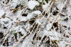 Ice crystals on shrubbery Stock Photos
